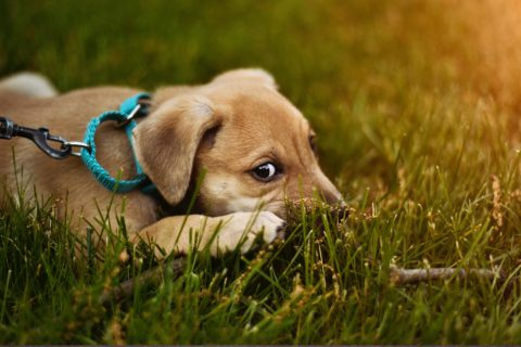 puppy comfortable on lawn