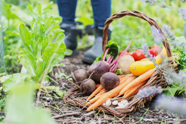 community garden feeding those in need